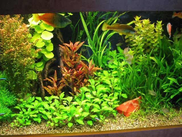 1aquanijn_aquariumwim_027.jpg