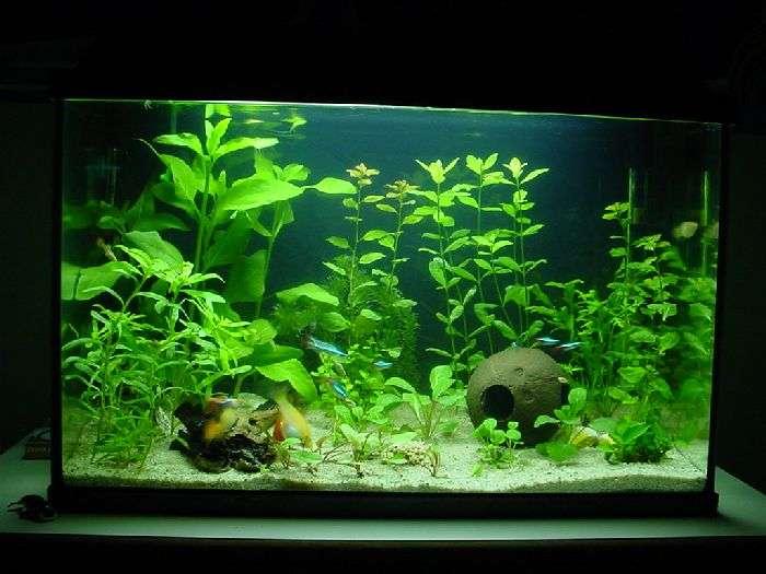 Starterspakket Aquaplantsonline Nl