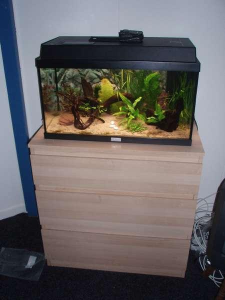 Kastje Onder Aquarium Buigt Door Het Nederlandstalig