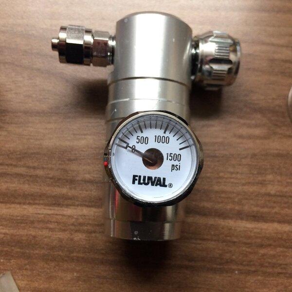 88 Gram Fluval (2).JPG