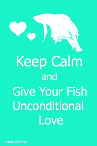 911ec3af2433826d31cdcd789610a332--betta-fish-care-betta-fish-tank-ideas.jpg