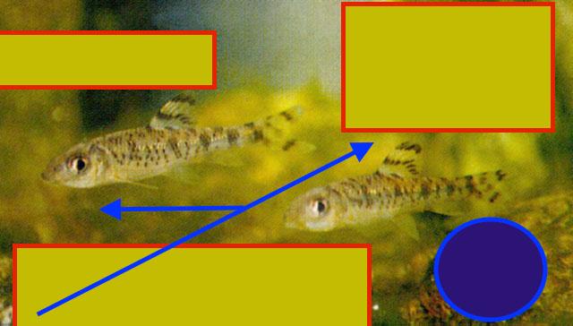 A-guess2?.jpg