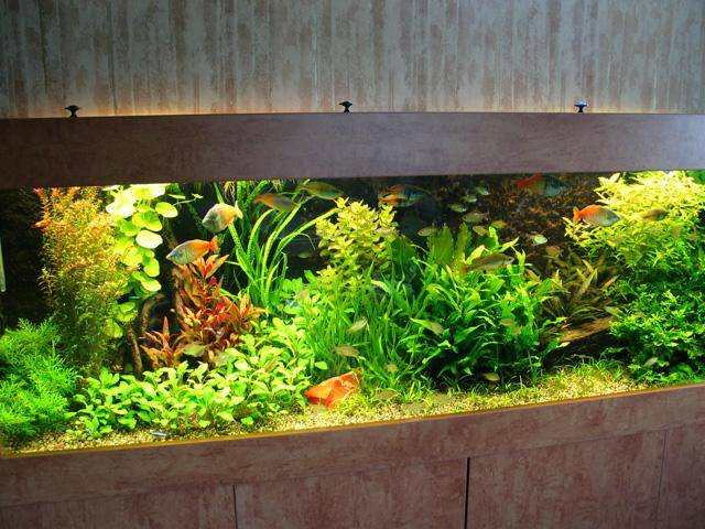 aquanijn_aquarium_wim026.jpg