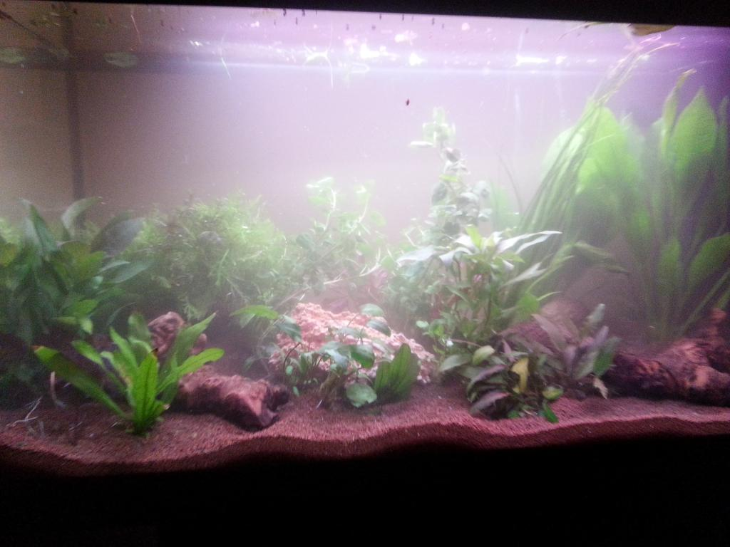 aquarium%20dag%201.jpg