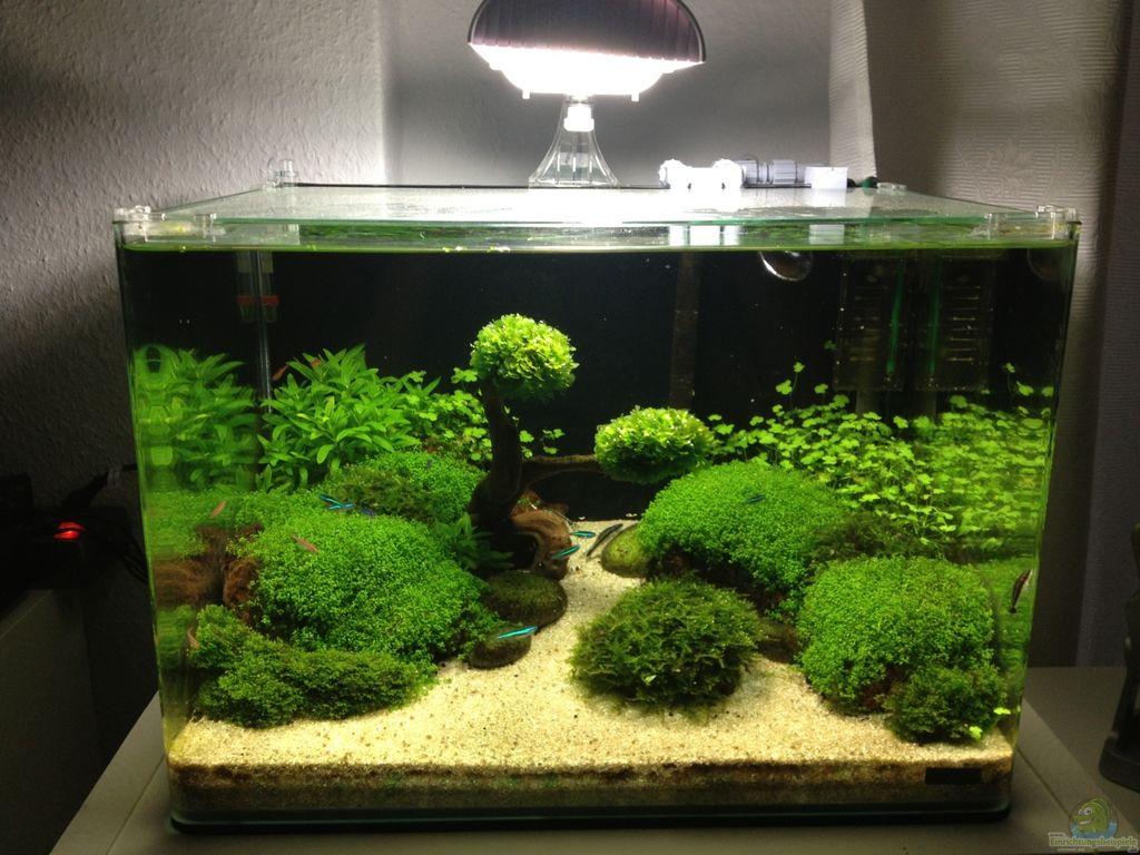 aquarium-hauptansicht-von-becken-27280__fda97189487edc68b98c85bbbf020498.jpg