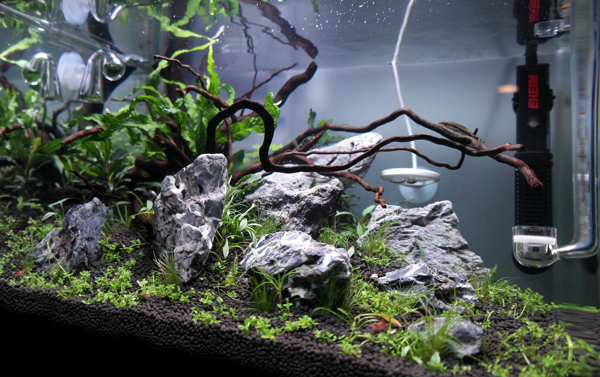 aquarium ingezoomd.jpg