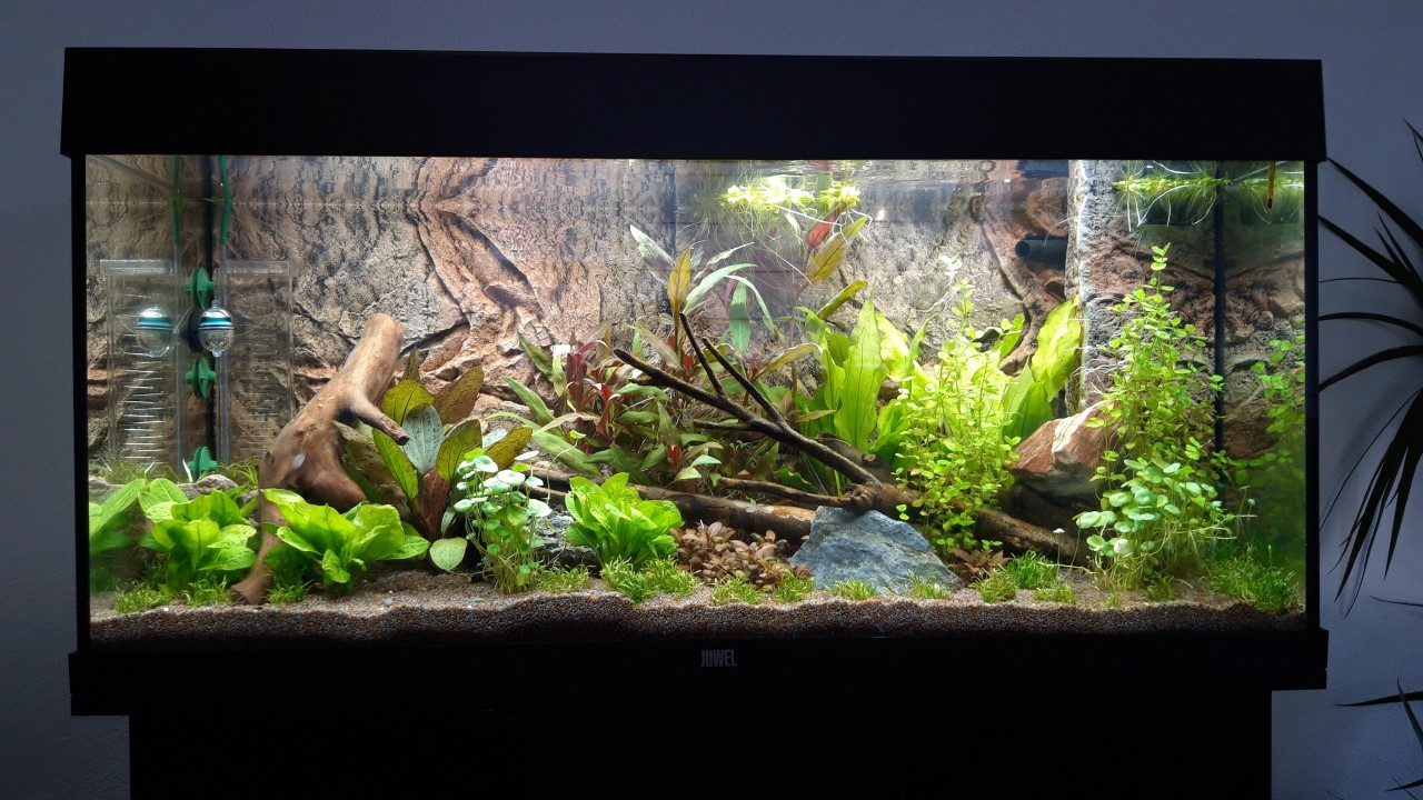 Aquarium week 2.jpg