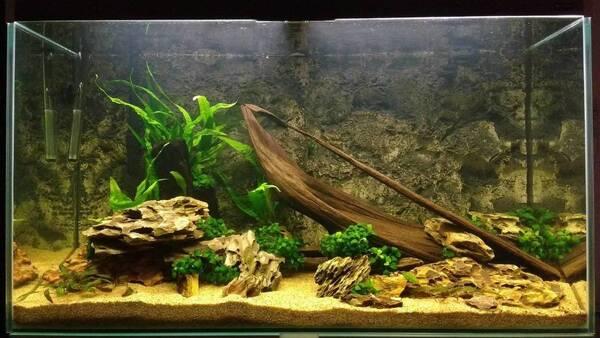 Aquarium week 3 (1).jpg