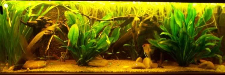 aquarium160dec.jpg