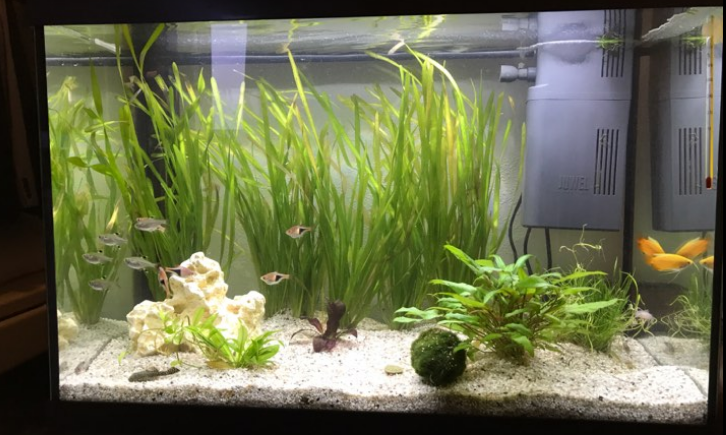 aquarium70l.png