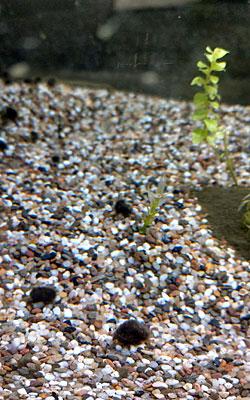 aquariumdingen1_kl.jpg