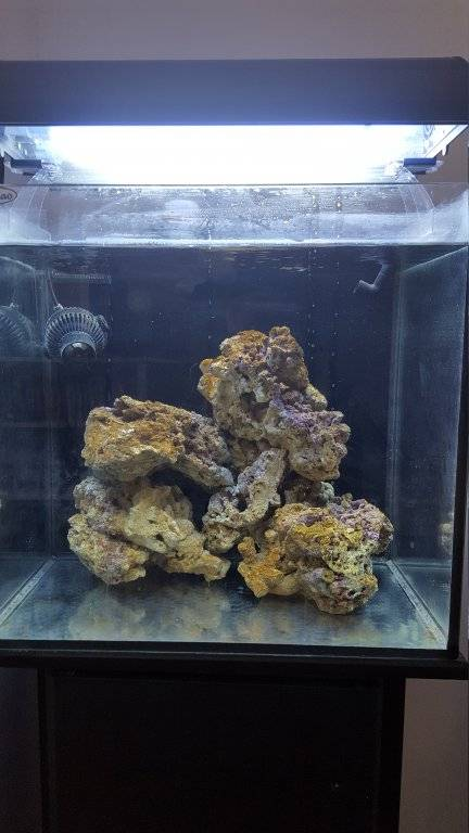 bruin alg.jpg