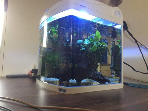 buro aquarium (7).JPG