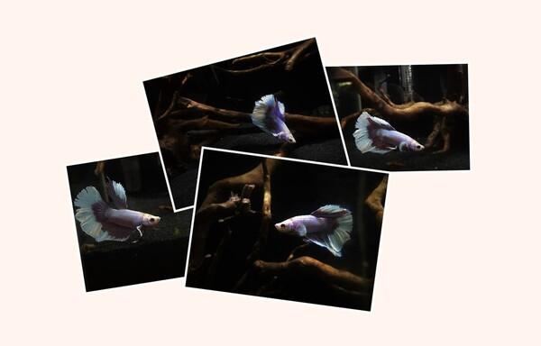 Collage 2018-10-21 18_28_23.jpg