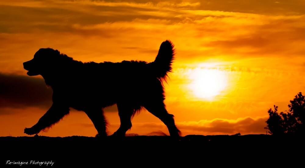 dog_silhouette_by_daantigresss-da63oii.jpg