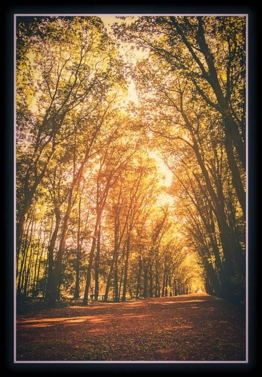 forest_by_daantigresss-daj6tl4.jpg