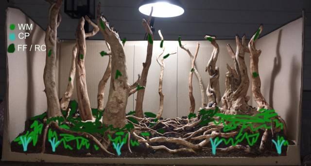 forest_scape_planting_v1.jpg