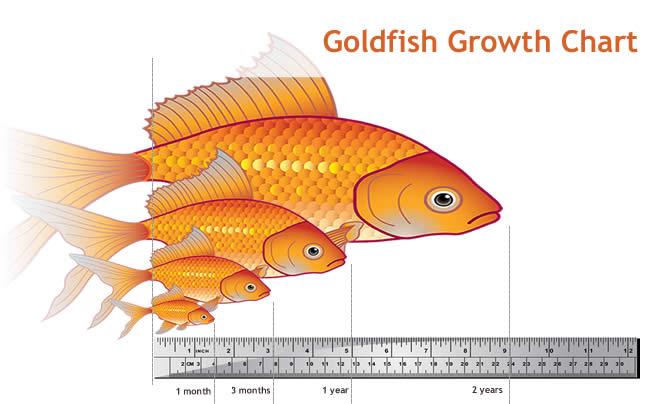 Goldfish Grow Chart.jpg