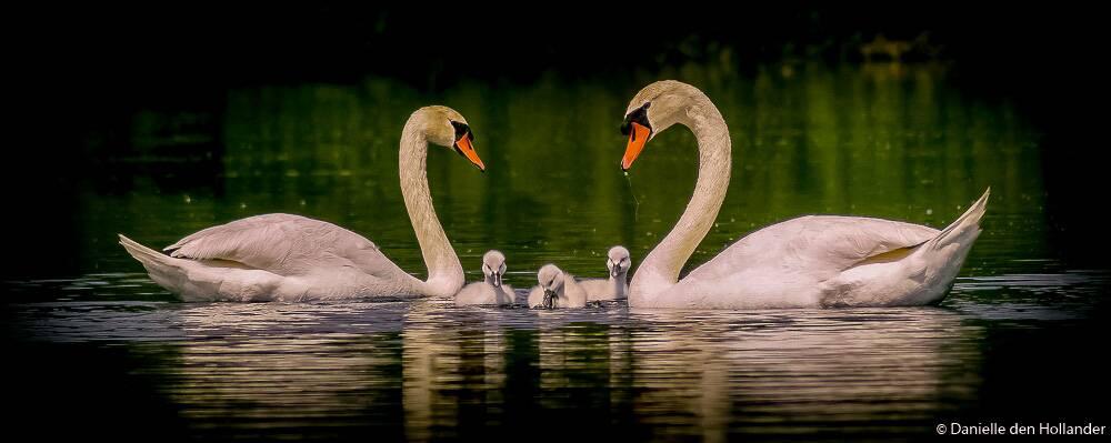 happy_family_by_daantigresss-dafd7n9.jpg