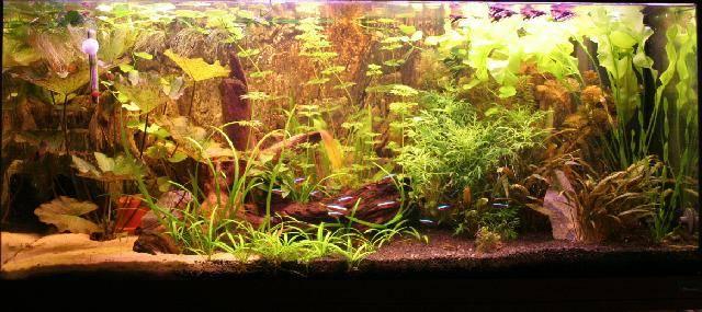 kaketoe_aquarium01.jpg