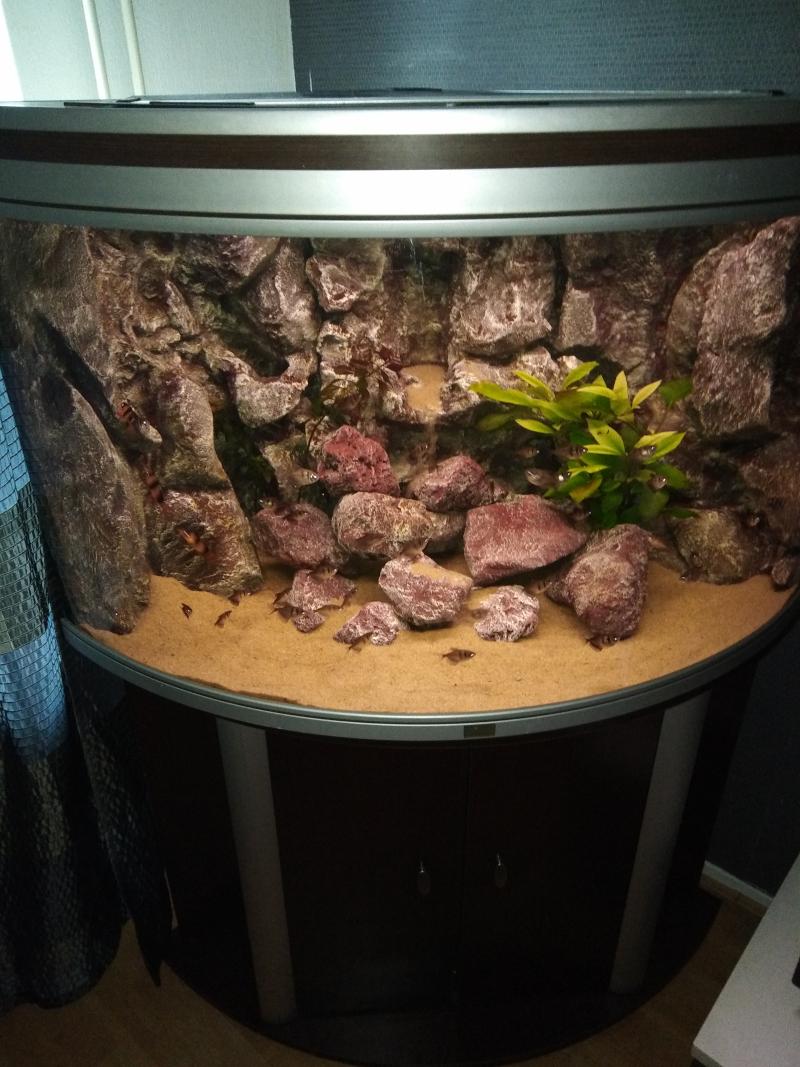 mijn aquarium.jpg