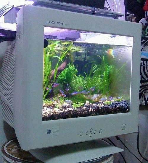 Monitor-aqarium.jpg