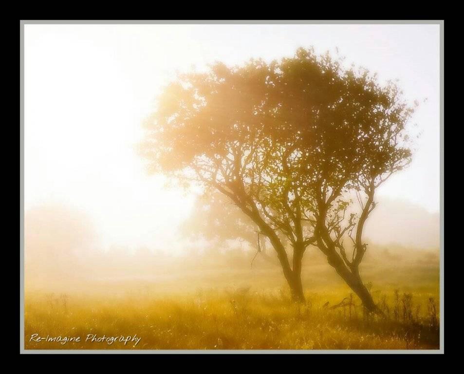 morning_sun_by_daantigresss-dam9znz.jpg