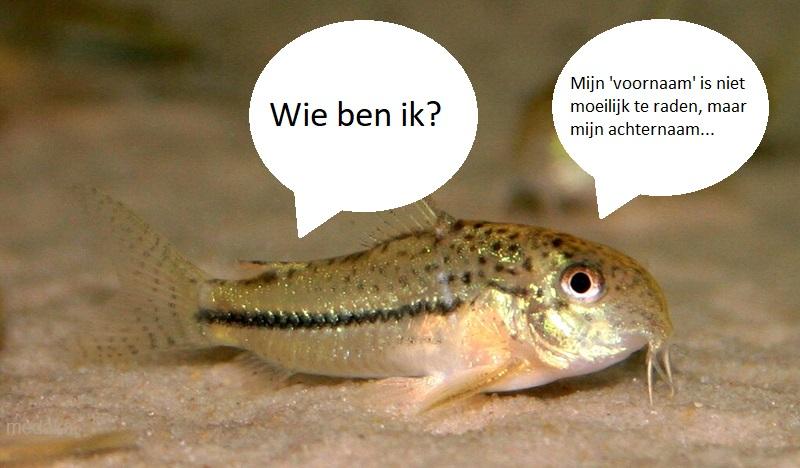 Mystery catfish.jpg