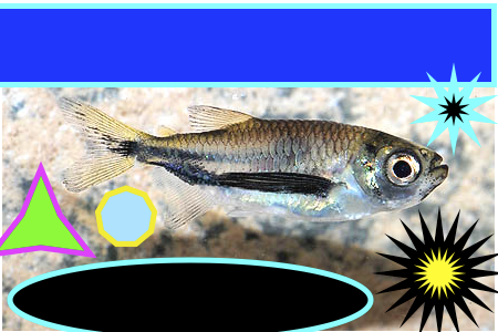 pescadinho2.png