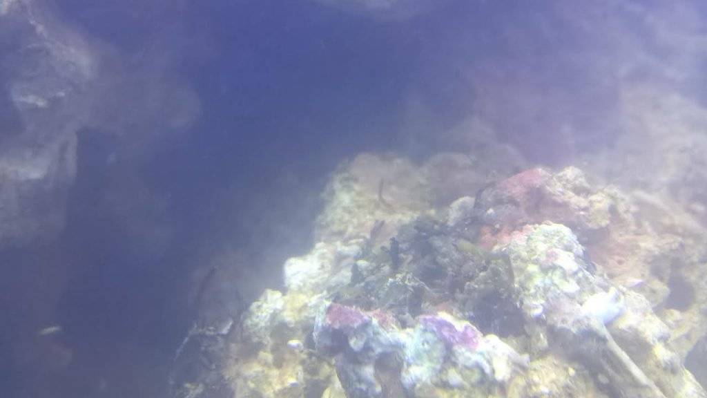 steen 4.jpg