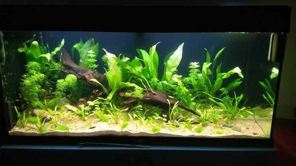 stenen en drijfplanten toegevoegd.jpg