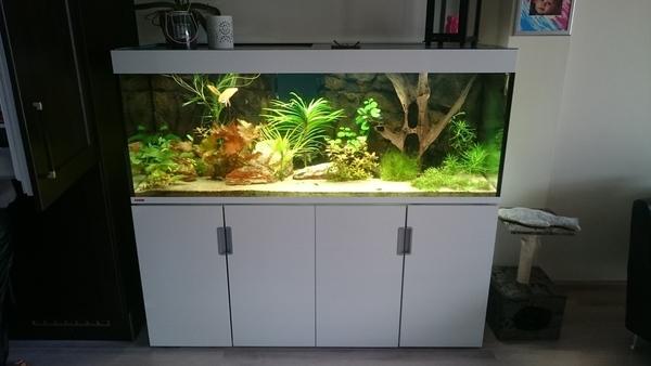 welke vissen in een 500 liter aquarium. Black Bedroom Furniture Sets. Home Design Ideas