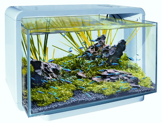 coral 39 s project 60 liter zee aquarium. Black Bedroom Furniture Sets. Home Design Ideas