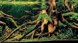 aquariumhout-700x388.jpg