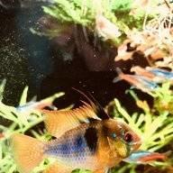 fish-lover
